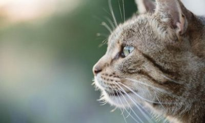 Food-Fit-for-All-Cat-Breeds