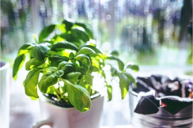 plants-for-keeping-pests-away