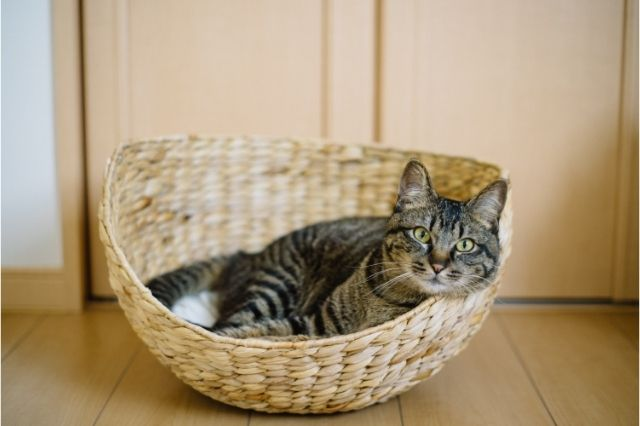 common-health-issues-that-cat-owners-need-to-take-care-of