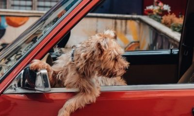 moving-day-tips-for-pets
